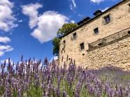 Lavendelbeet auf dem Gelände der Burg Greifenstein